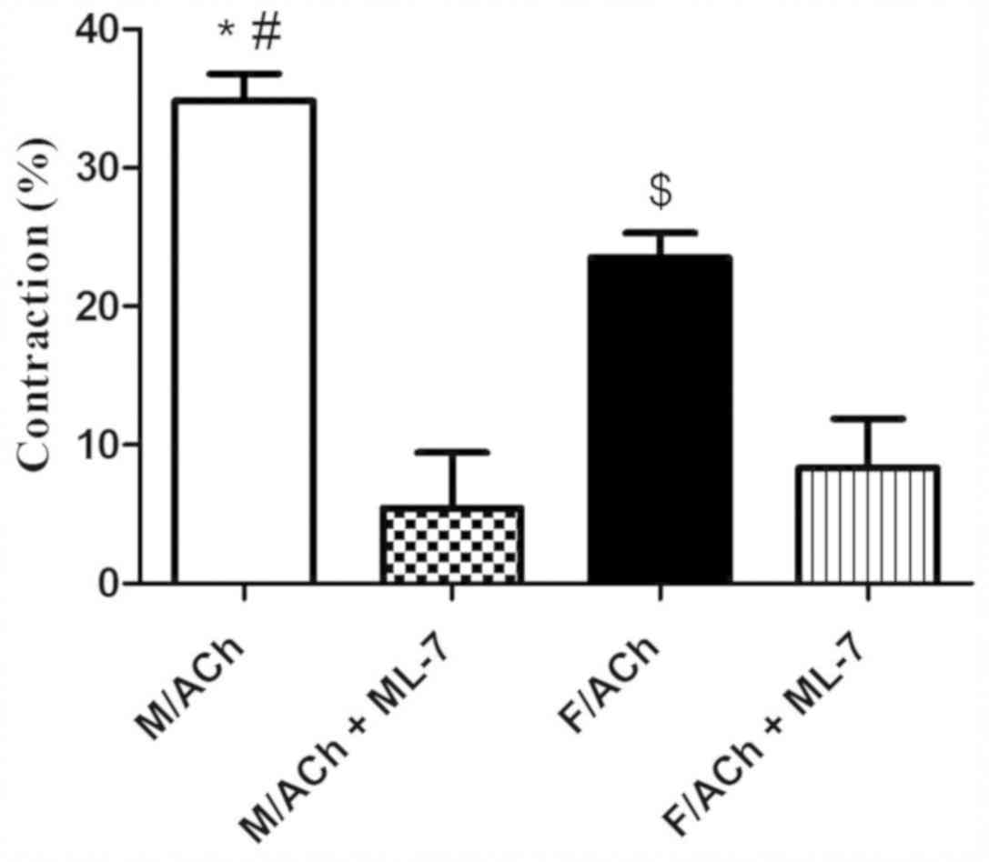 Gender differences in the regulation of MLC20 phosphorylation and ...