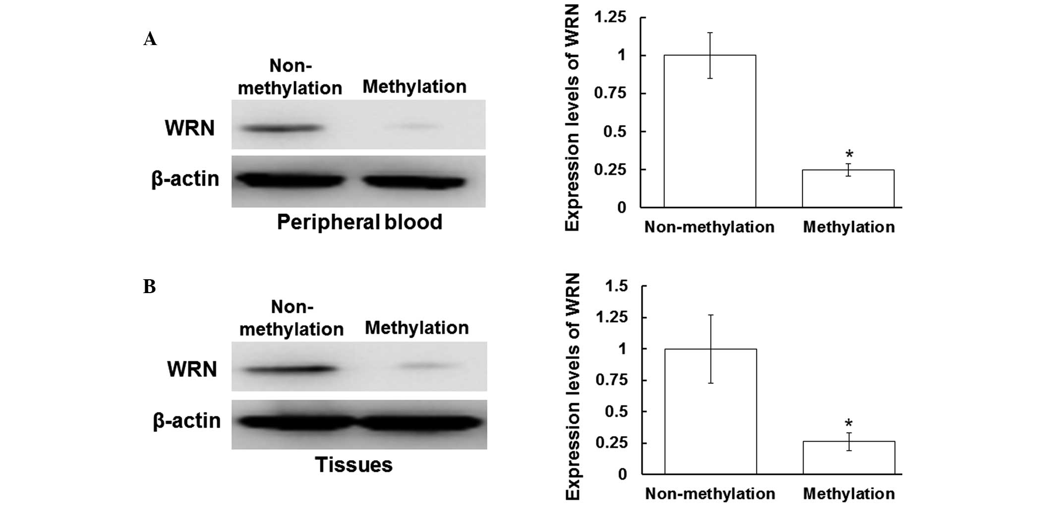 Expression Levels of Proteins Myc And P53 Protein Expression