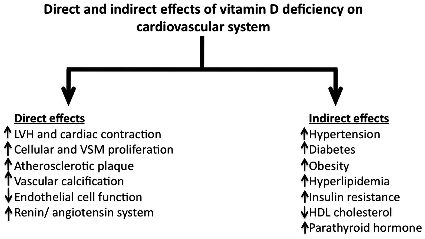 Vitamin D Nutritional Status And The Risk For Cardiovascular Disease