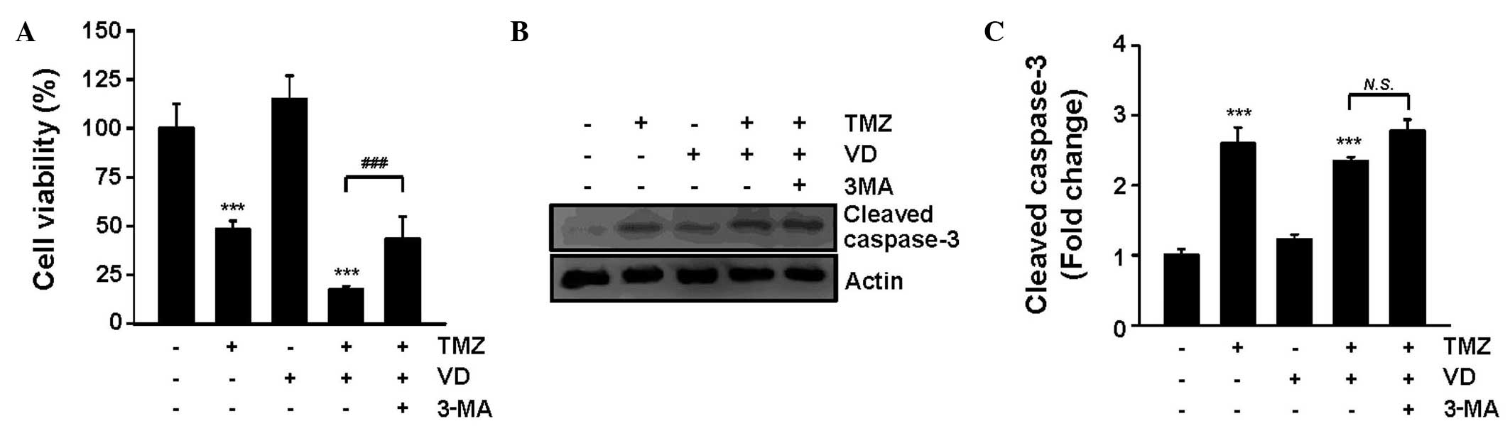 Autophagy enhancement contributes to the synergistic effect of ...