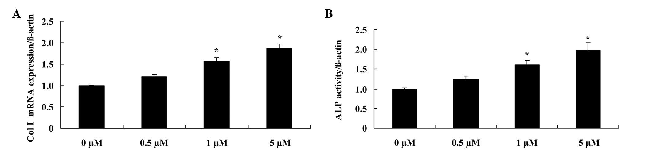 glycitin regulates osteoblasts through tgf β or akt signaling