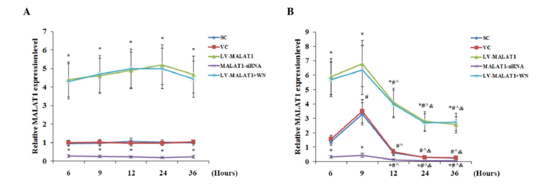 Long noncoding RNA MALAT1 inhibits apoptosis induced by