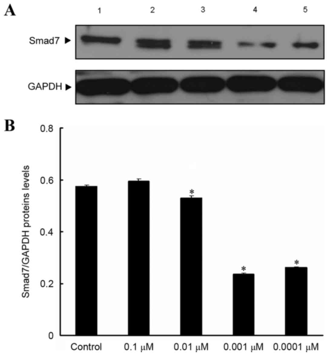 Effect of isopsoralen on Smad7 in osteoblastic MC3T3‑E1 cells
