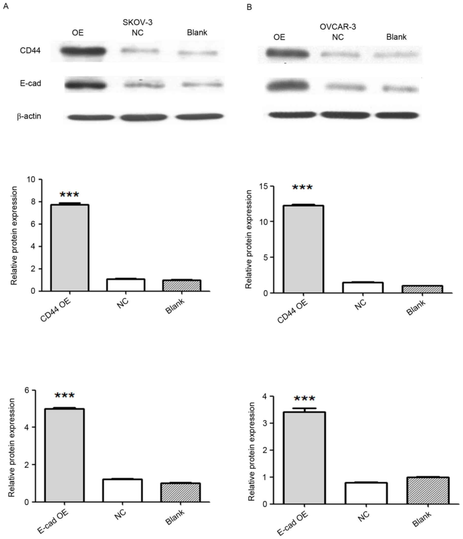 Effects Of Cd44 And E Cadherin Overexpression On The Proliferation Adhesion And Invasion Of Ovarian Cancer Cells
