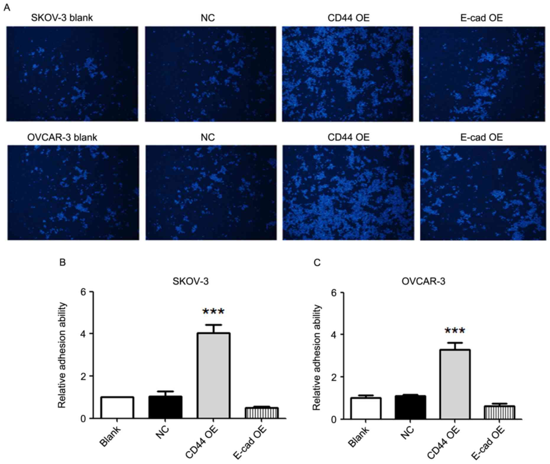 Effects of CD44 and E‑cadherin overexpression on the