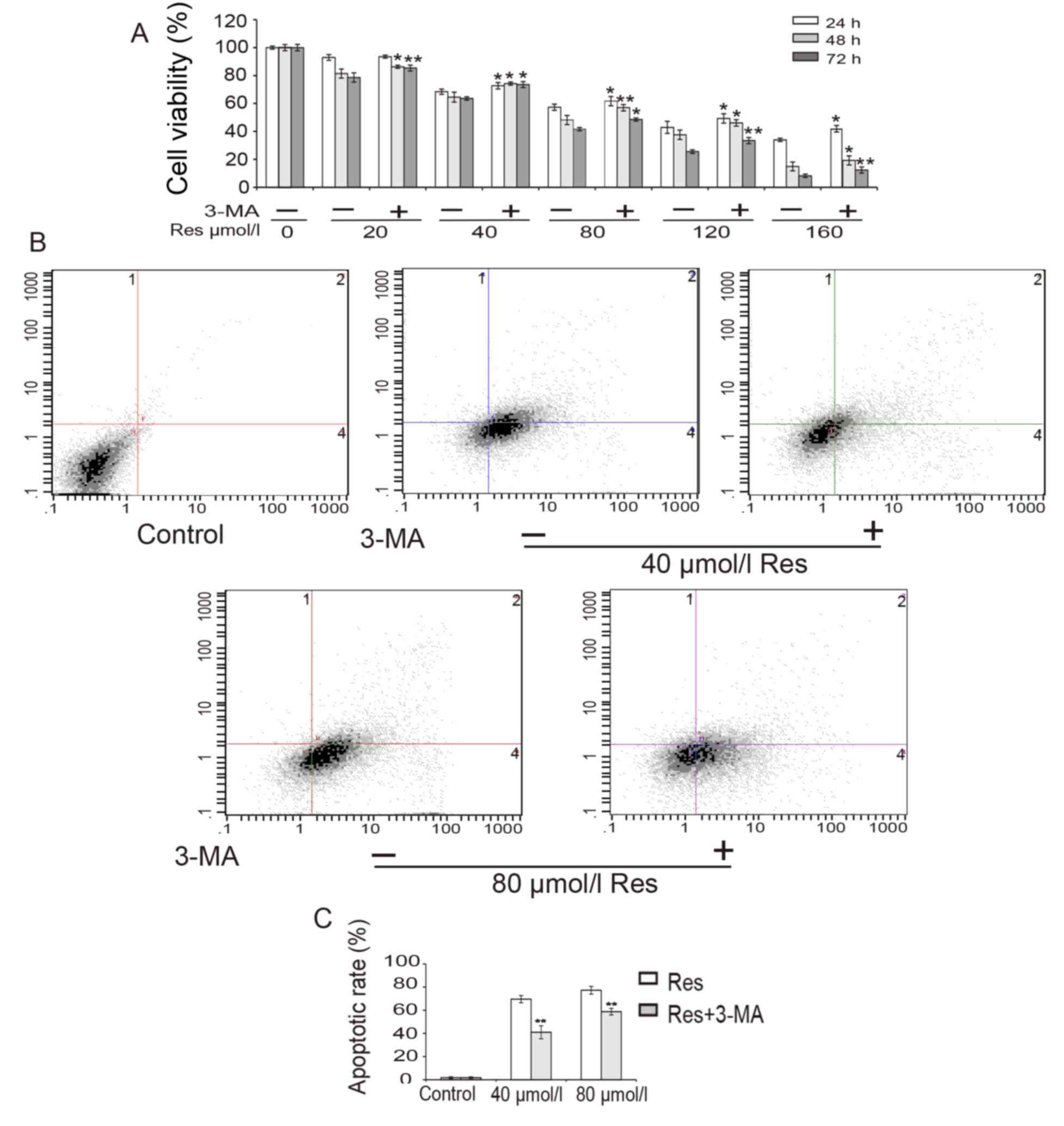 Resveratrol induces autophagic apoptosis via the lysosomal