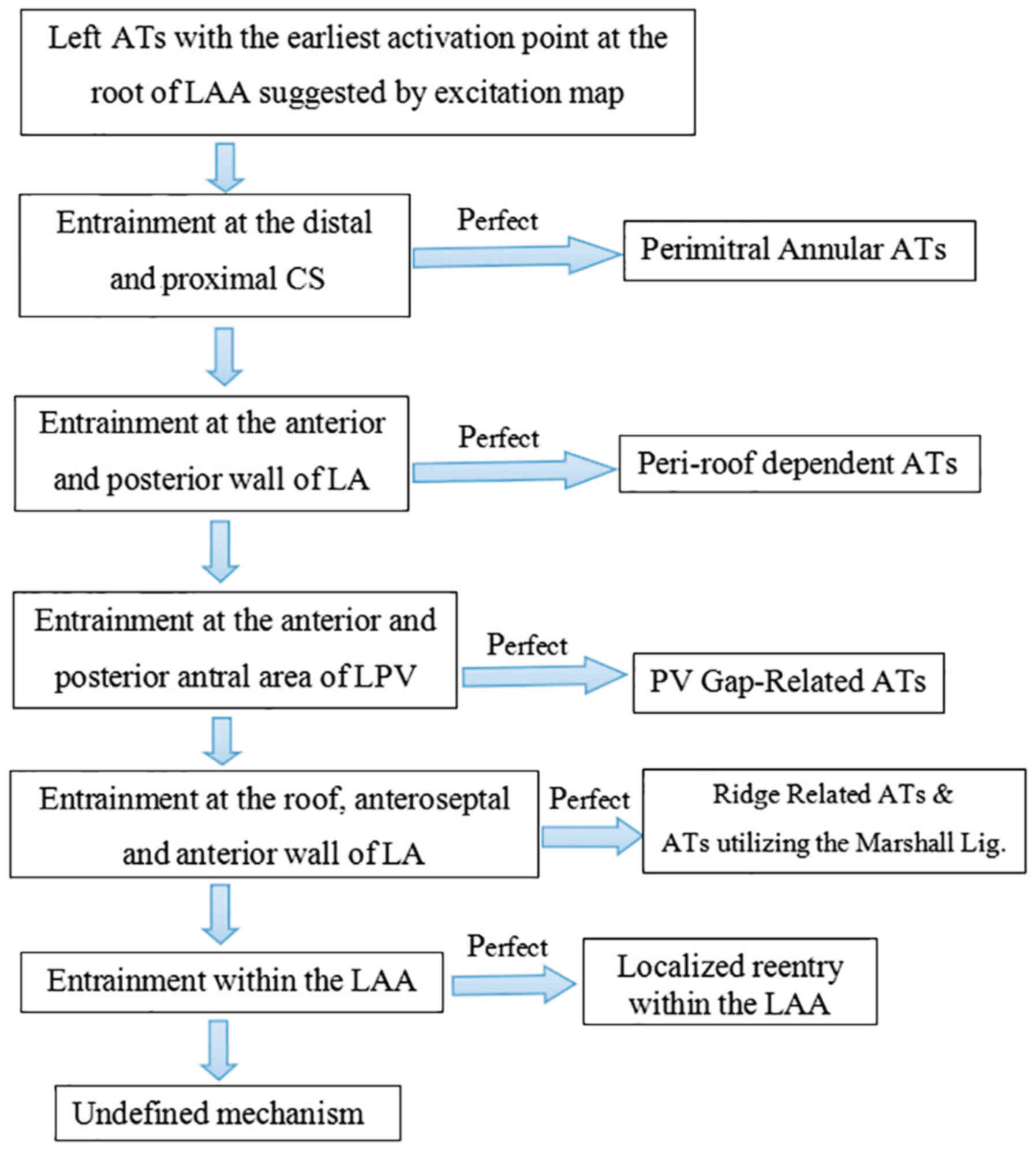 Atrial Fibrillation Concept Map.Sustained Localized Reentry Within The Left Atrial Appendage As A
