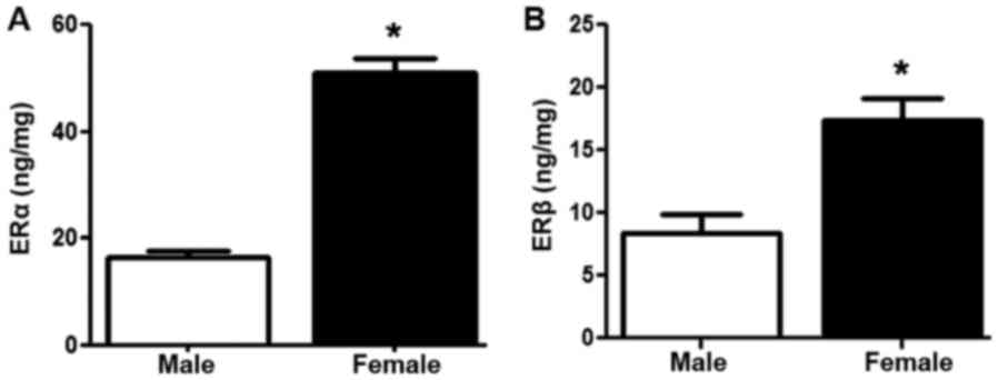 Estrogen relaxes gastric muscle cells via a nitric oxide