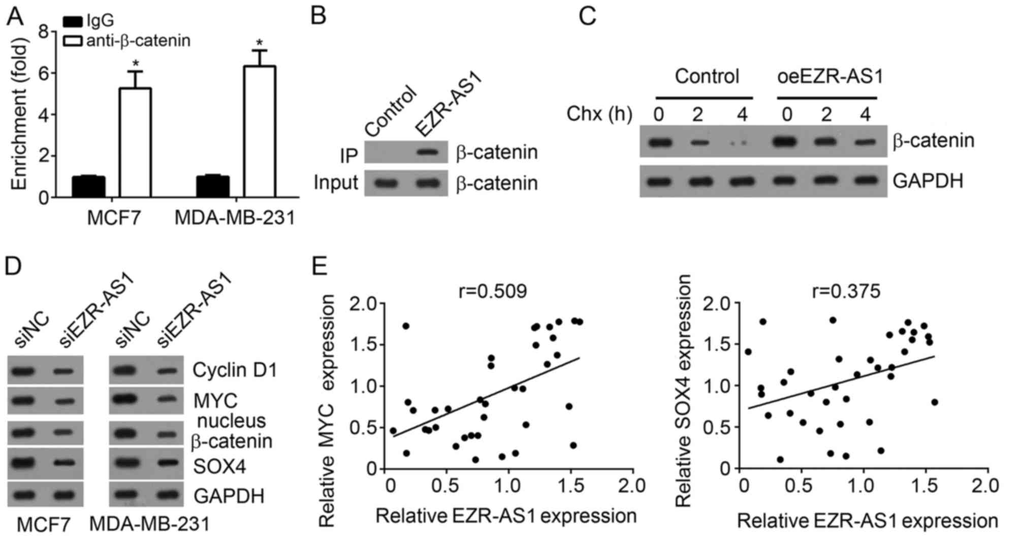 Long noncoding RNA EZR‑AS1 promotes tumor growth and