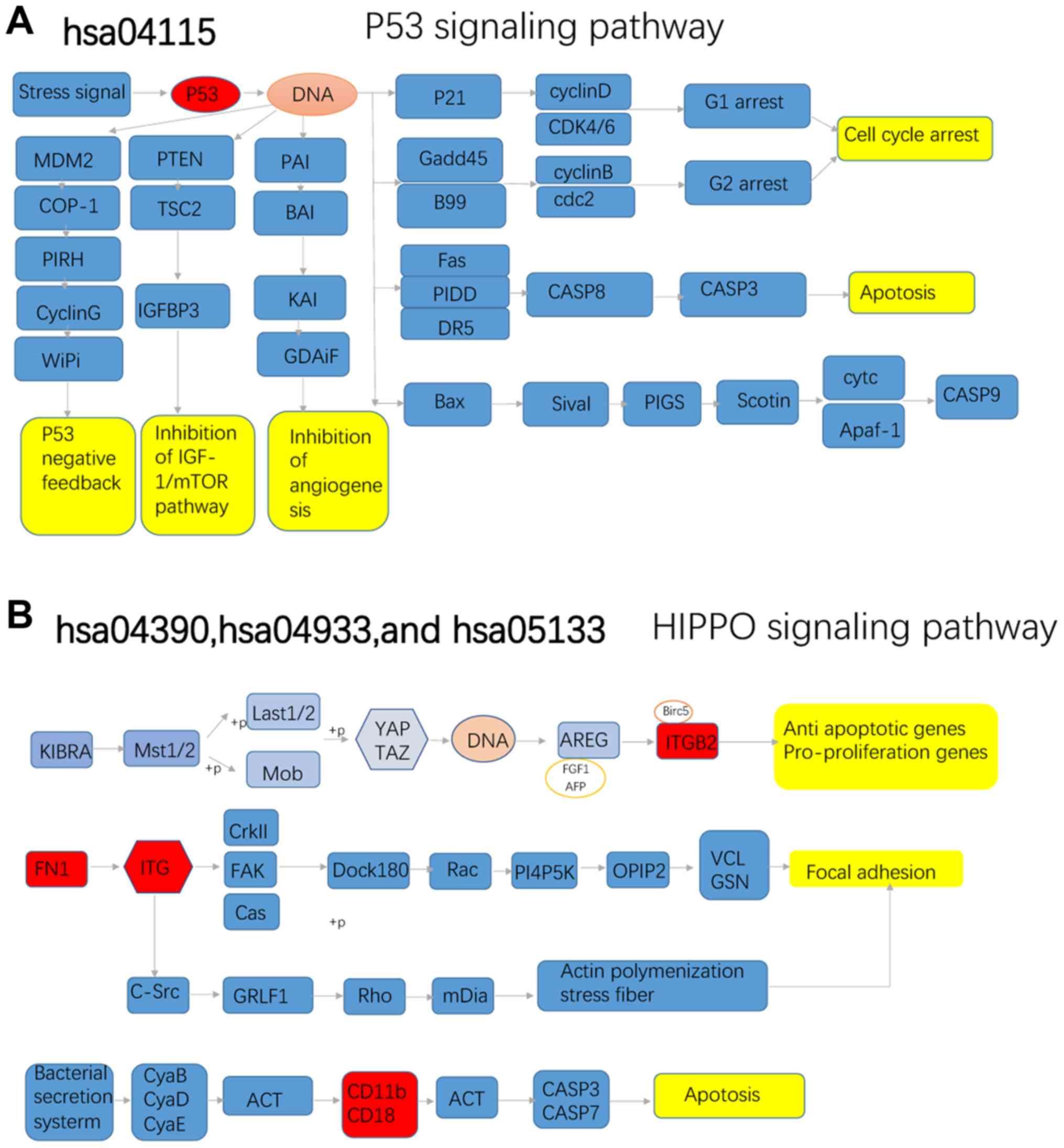 Integrated bioinformatics analysis reveals novel hub genes
