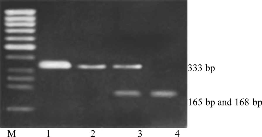 Sulfotransferase 1a1 Arg213his Polymorphism And Prostate