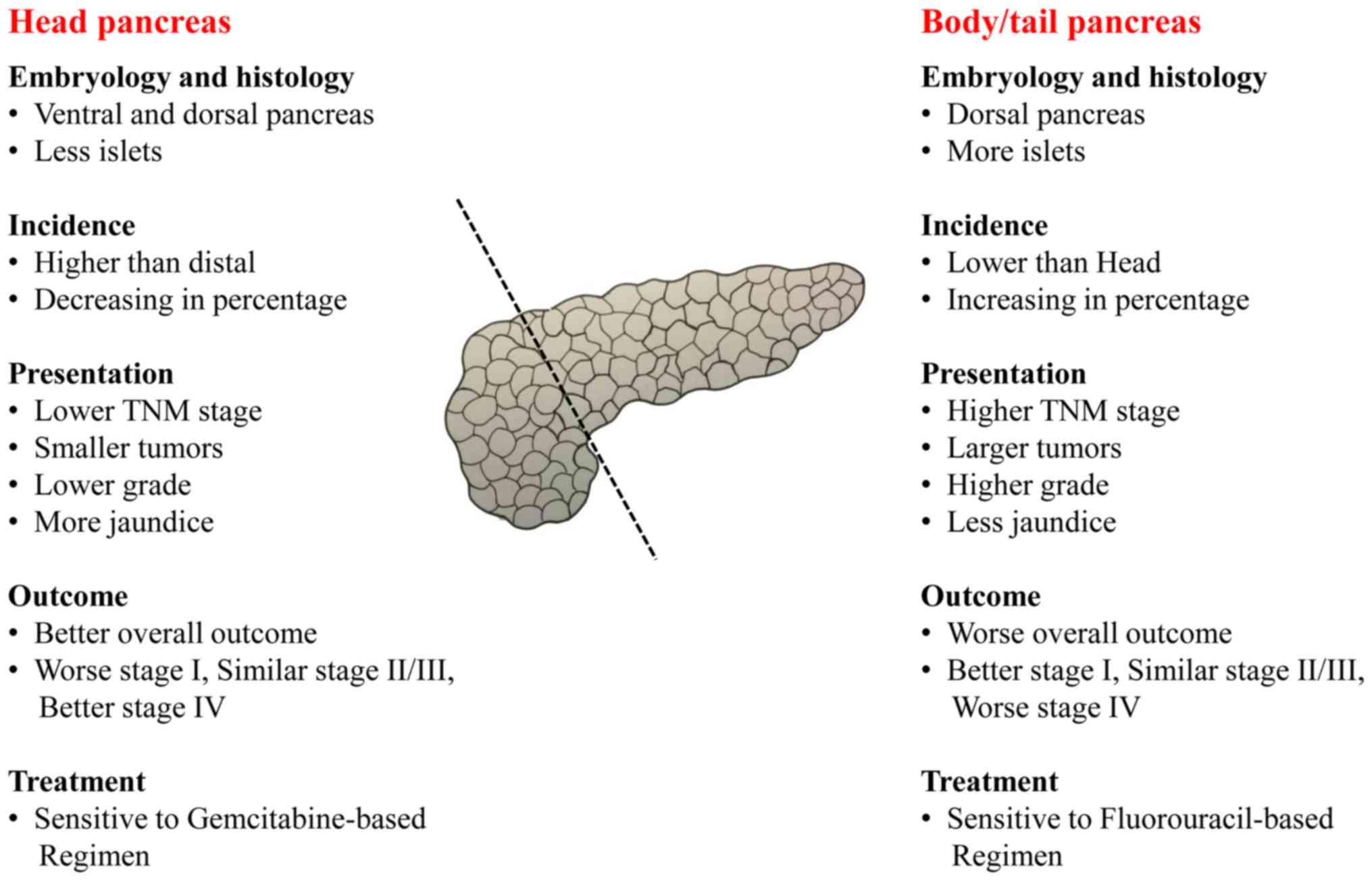 tip of pancreatic cancer)