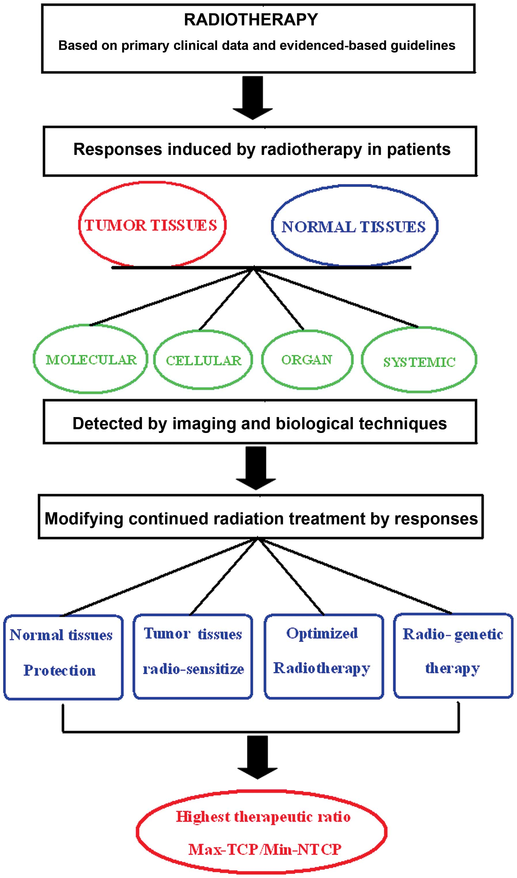 Strategies To Optimize Radiotherapy Based On Biological