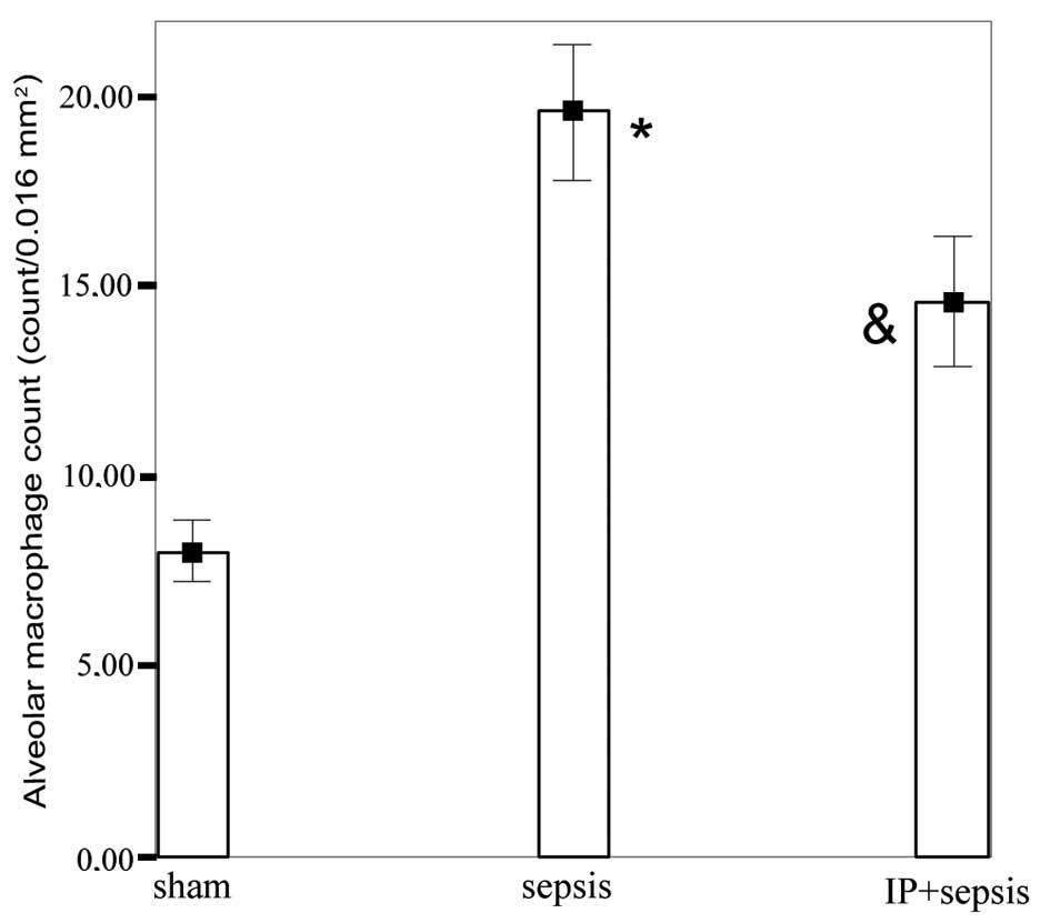 Ischemic preconditioning attenuates lipid peroxidation and