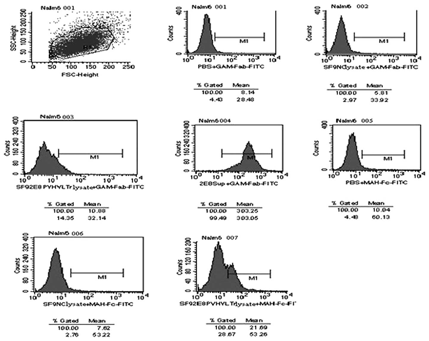 Construction and expression of a human/mouse chimeric CD19
