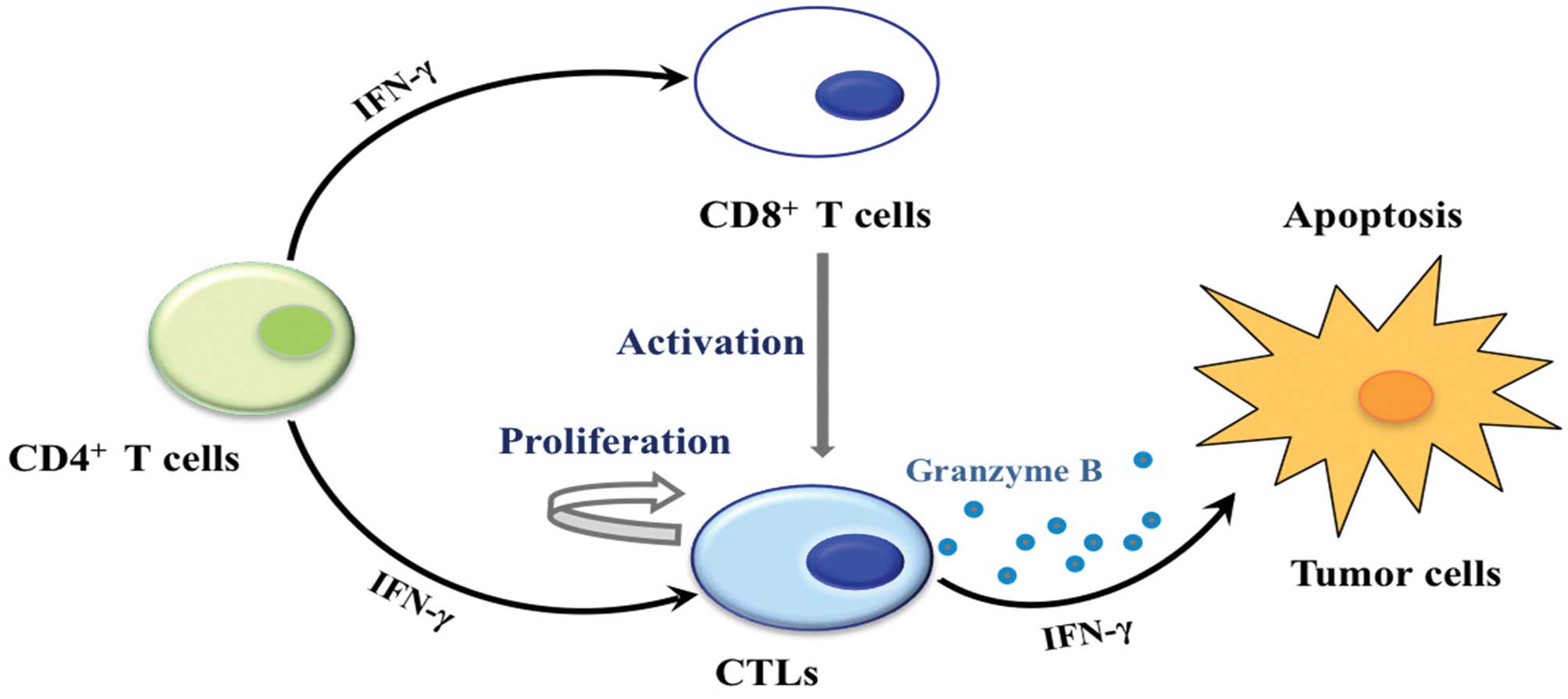 Stem Cell Characterization and Analysis Tools