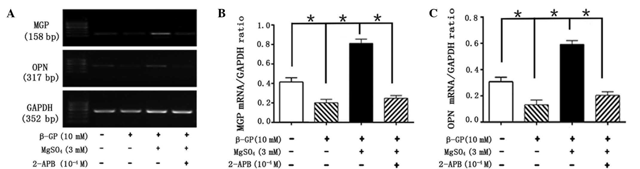 Magnesium modulates the expression levels of calcification