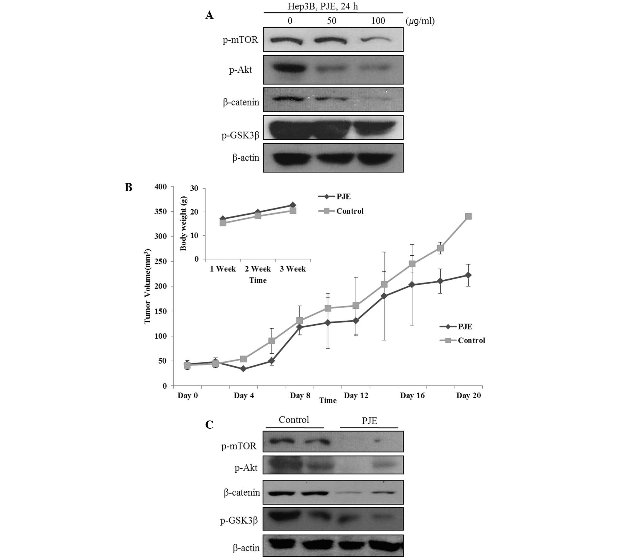 SH exerts in vivo anticancer effect on HCC xenograft model