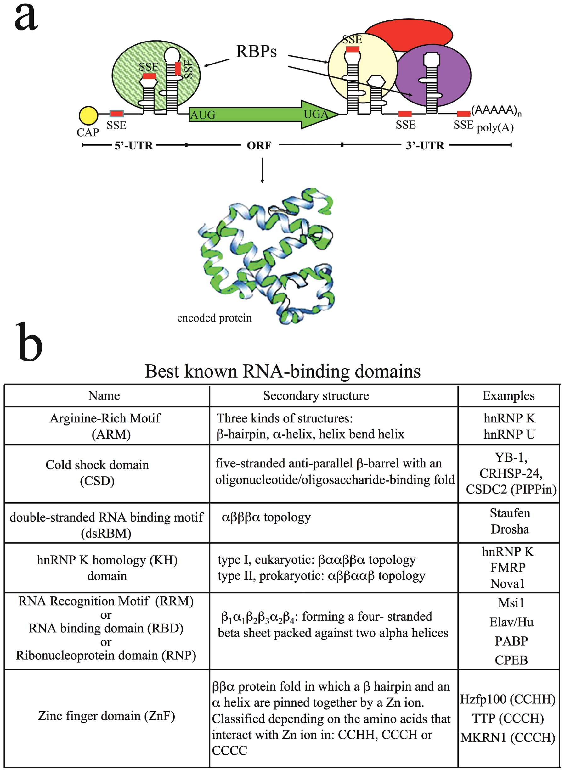 Regulation of mRNA transport, localization and translation in the ...