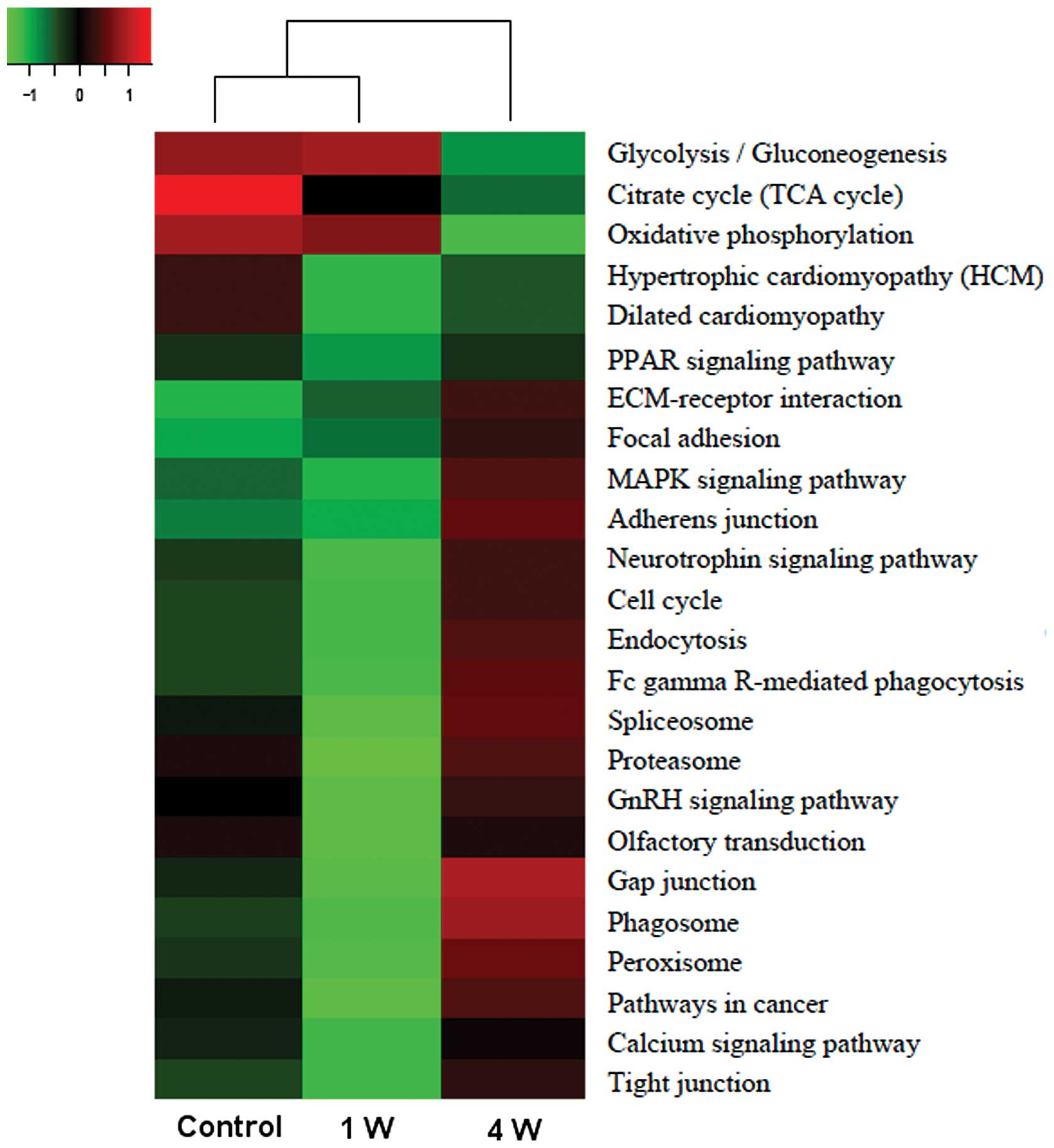 Proteomic and bioinformatic analysis of differentially expressed