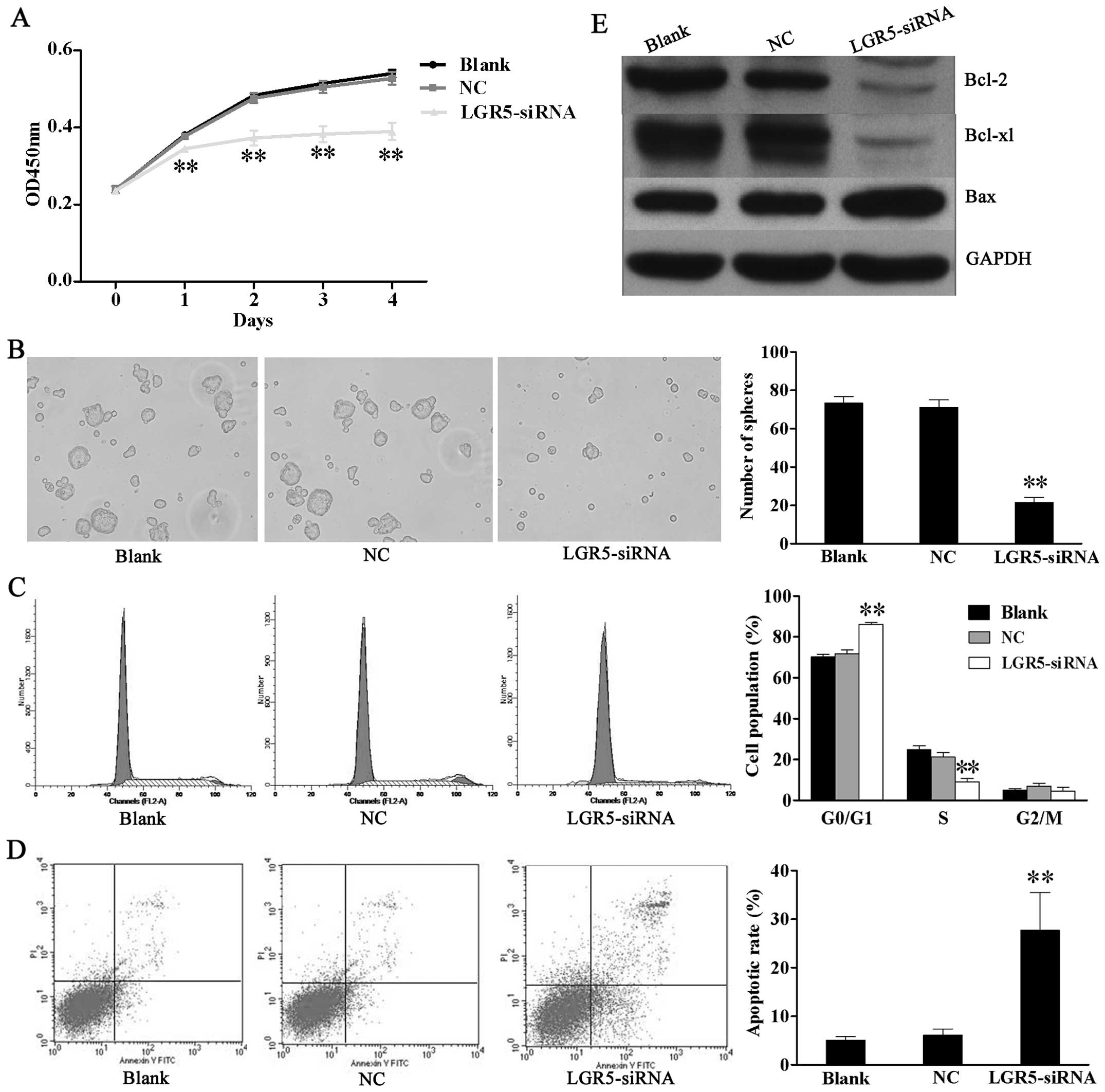 Lgr5 Is Required For The Maintenance Of Spheroid Derived