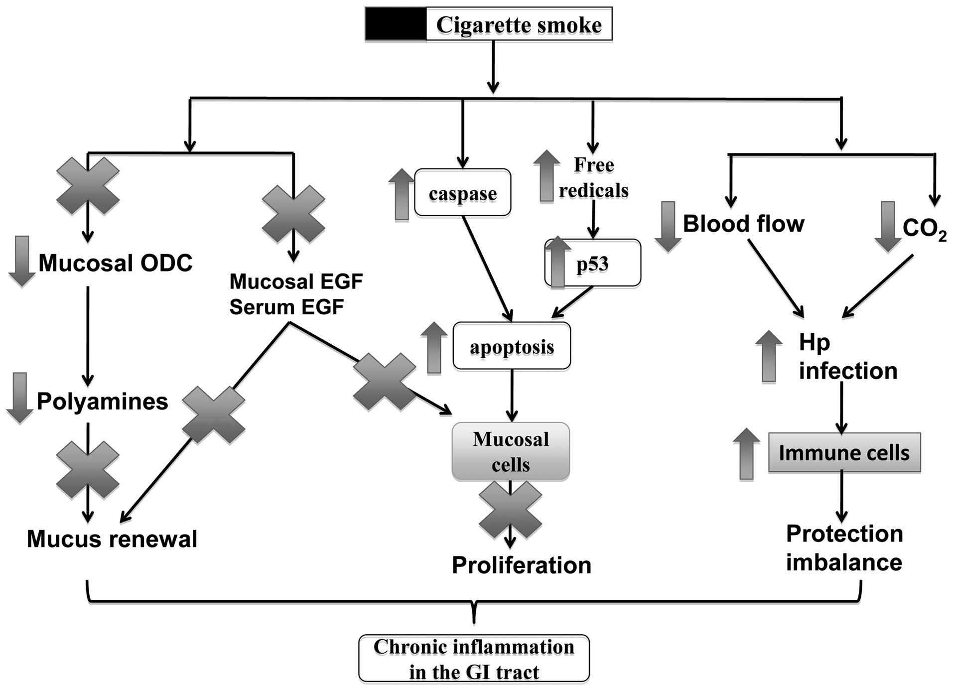 cigarette smoking and gastrointestinal diseases the causal