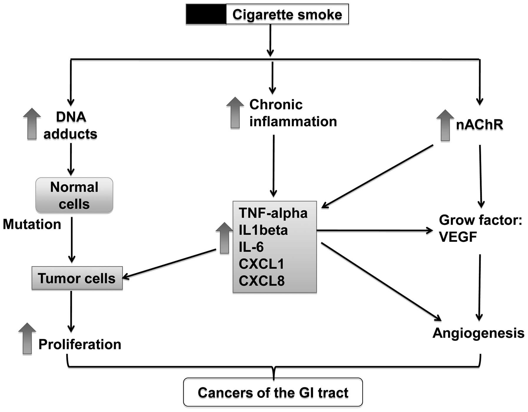Cigarette smoking and gastrointestinal diseases: The causal