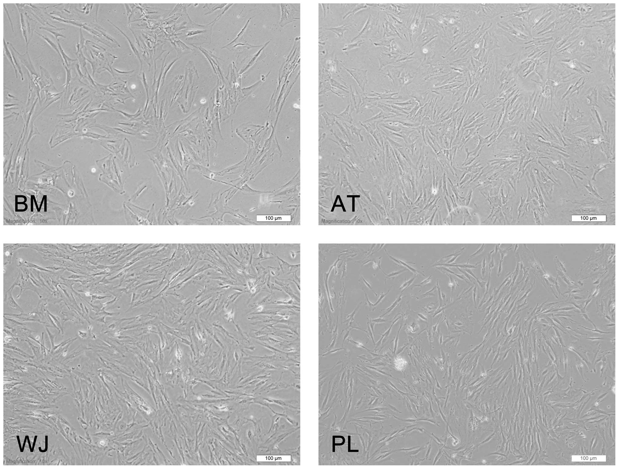 Comprehensive Characterization Of Four Different Populations Of Human Mesenchymal Stem Cells As