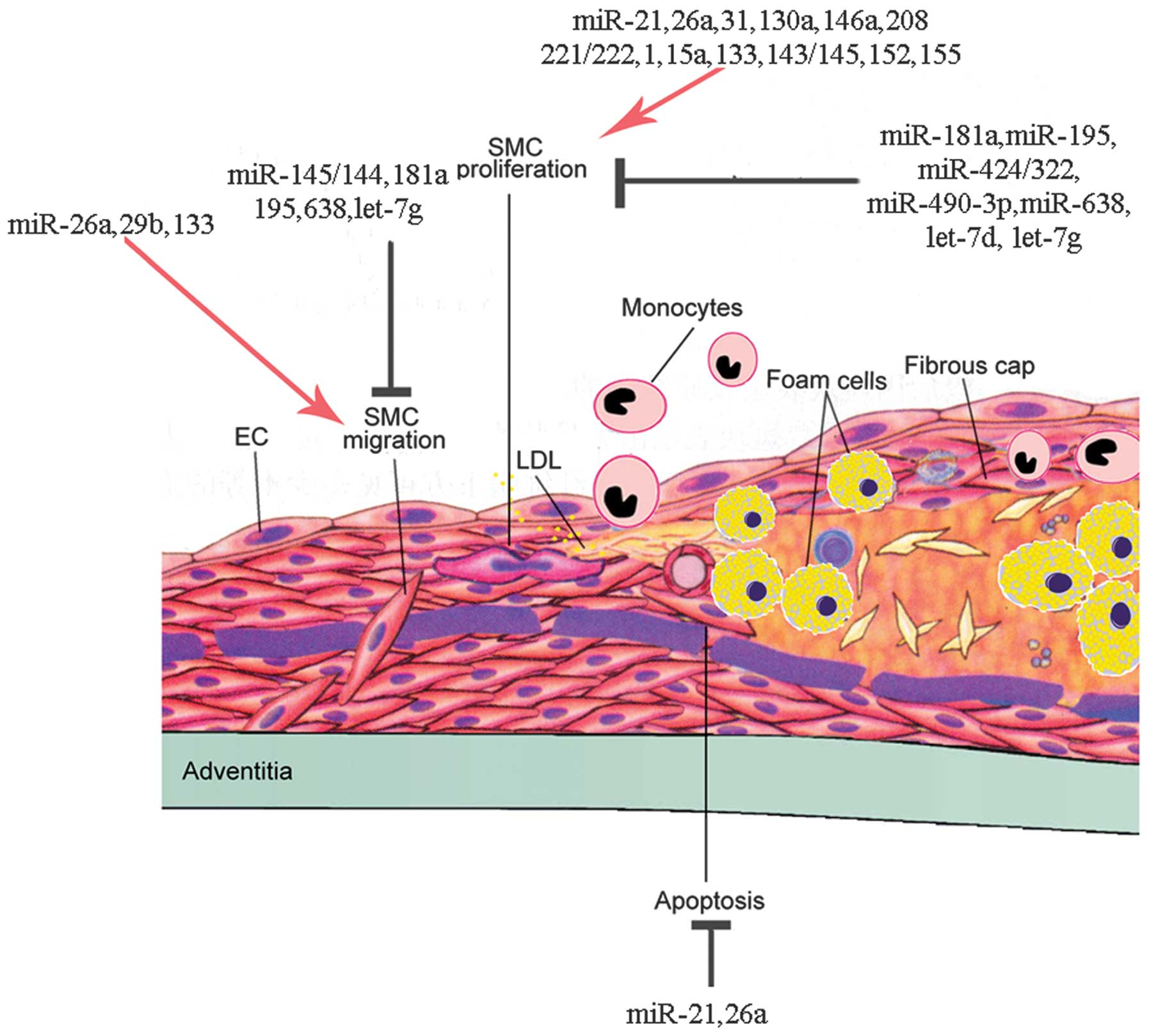 apoptosis of airway epithelial cells induced by corticosteroids