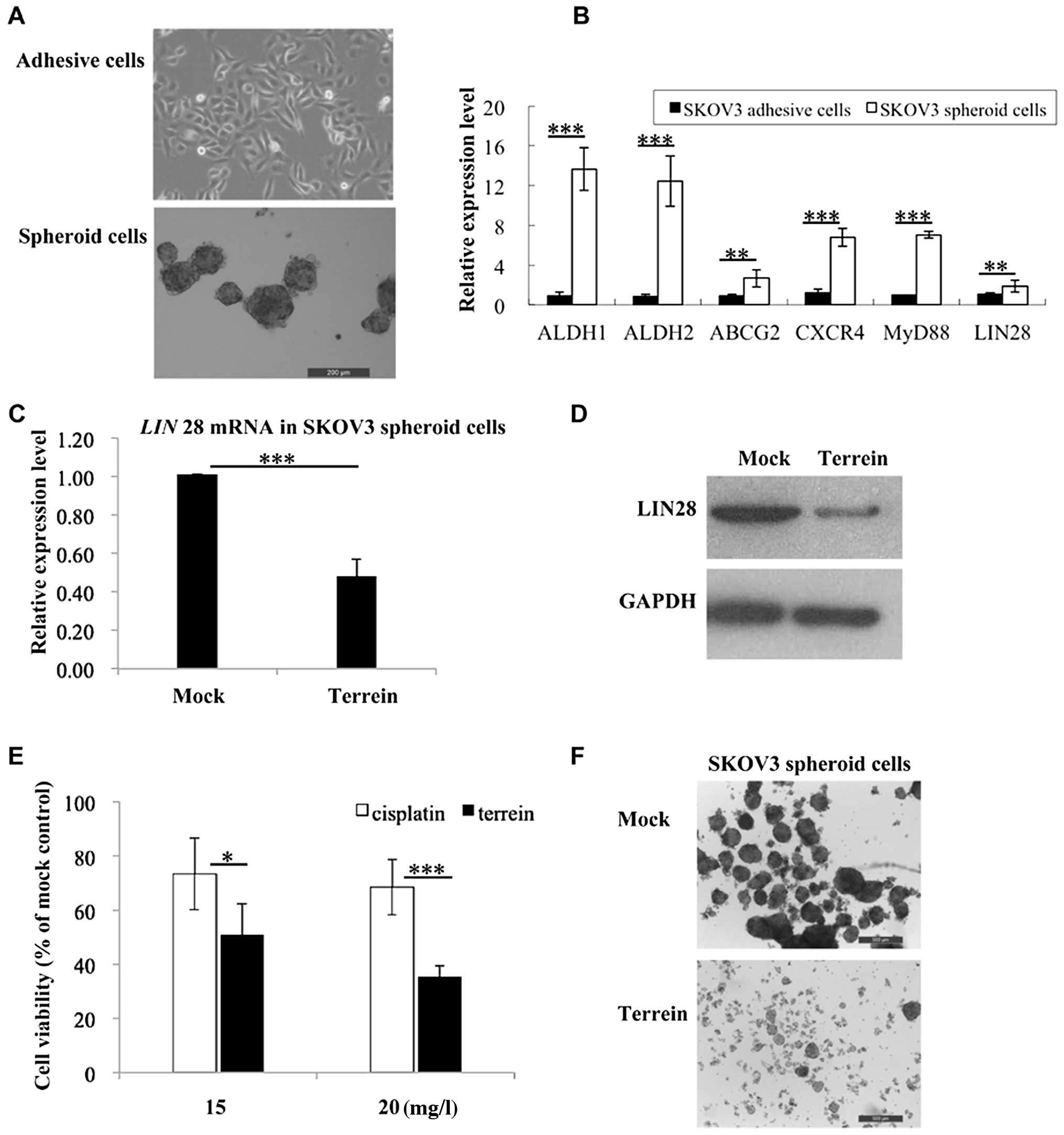 The Marine Derived Fungal Metabolite Terrein Inhibits Cell Proliferation And Induces Cell Cycle Arrest In Human Ovarian Cancer Cells