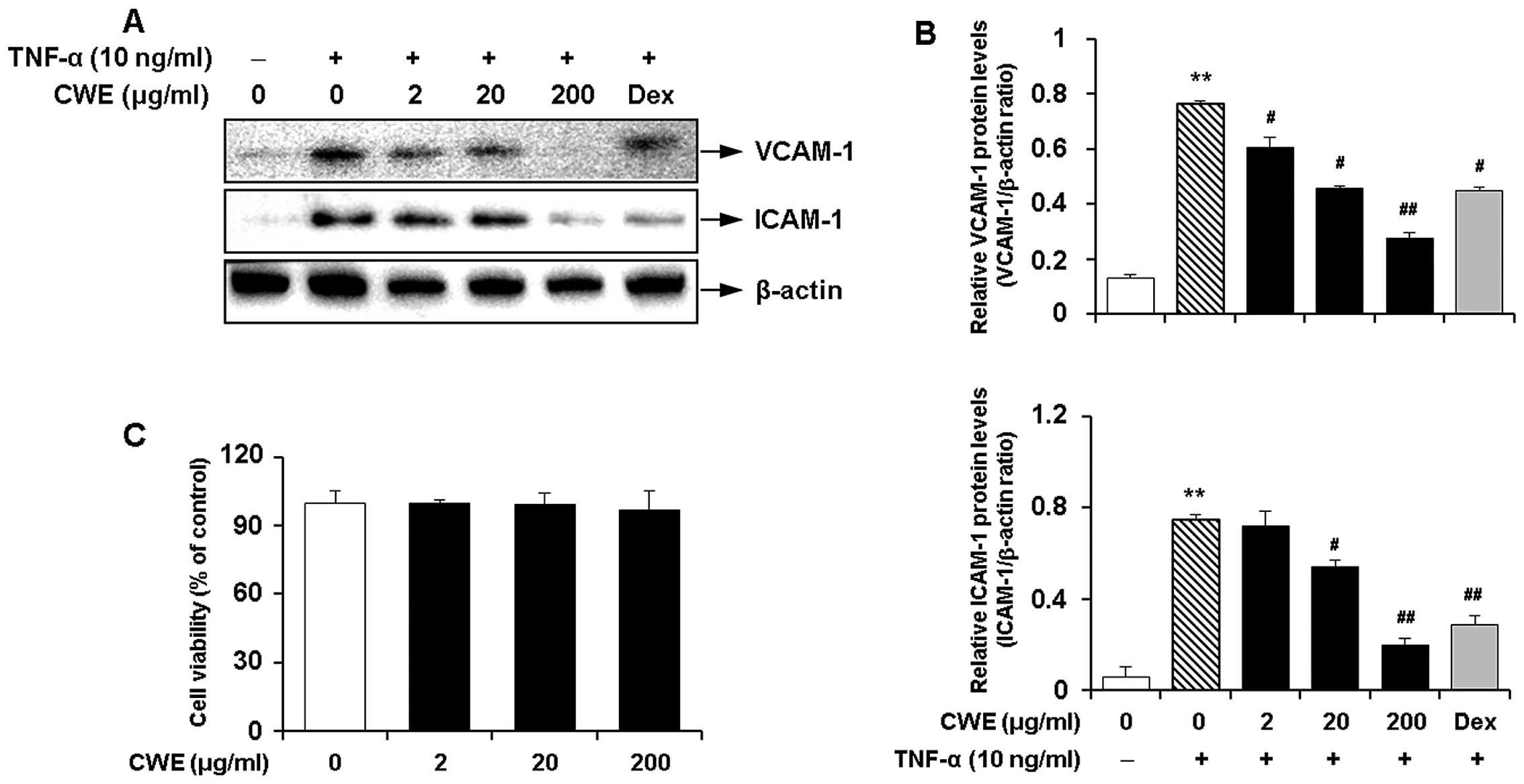 C Cells at confluence in 96 well plates were treated with CWE 2 20 and 200 μg ml for 16 h and cell viability was determined by MTT assay