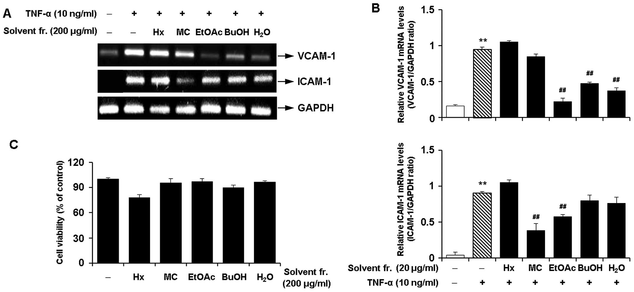 A The cells were pre treated with solvent fractions 200 μg ml for 2 h and then stimulated with TNF α 10 ng ml for 12 h The mRNA expression levels of