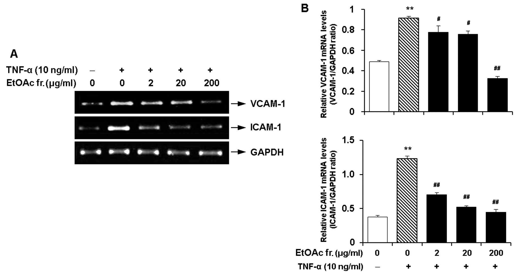 A Cells were pre treated with the EtOAc fraction 2 20 and 200 μg ml for 2 h and then stimulated with TNF α 10 ng ml for 12 h