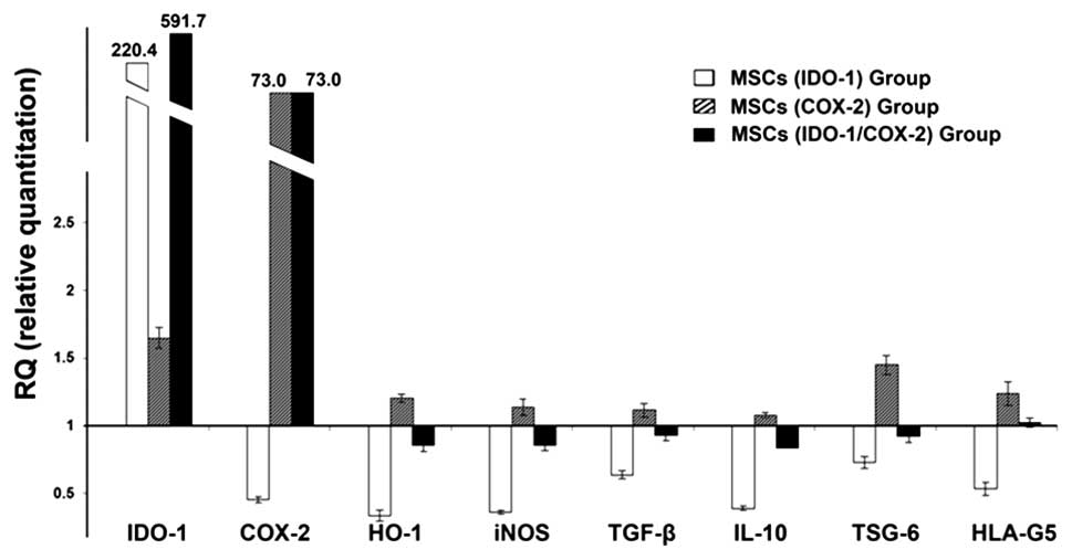 Overexpression of COX-2 but not indoleamine 2,3-dioxygenase