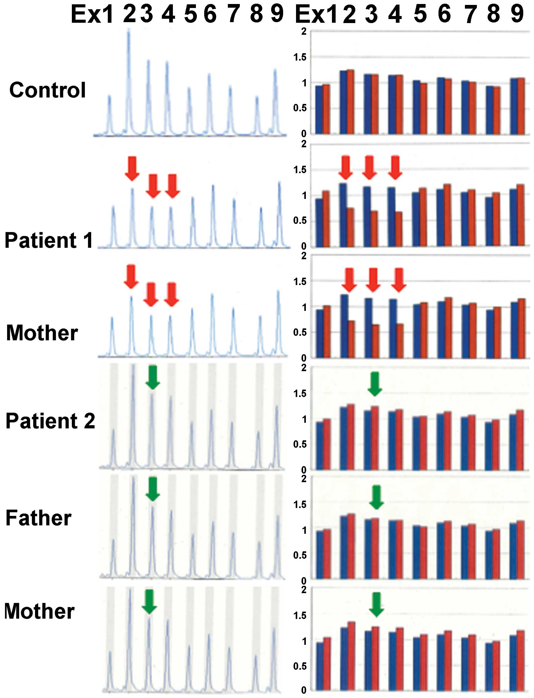 MLPA analysis of HMGCL