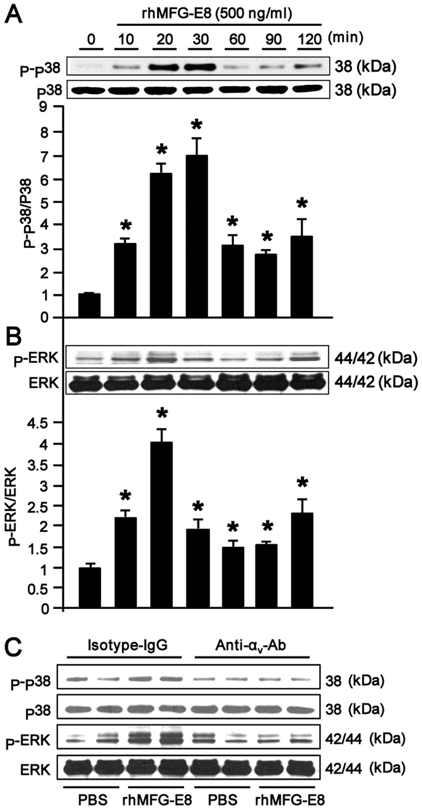 Mfg E8 Inhibits Neutrophil Migration Through V3 Integrin Dependent Block Diagram Fluid Inventor Ab Figure 3 Recombinant Human Milk Fat Globule Epidermal Growth Factor 8 Rhmfg Activates Mitogen Activated Protein Map Kinases