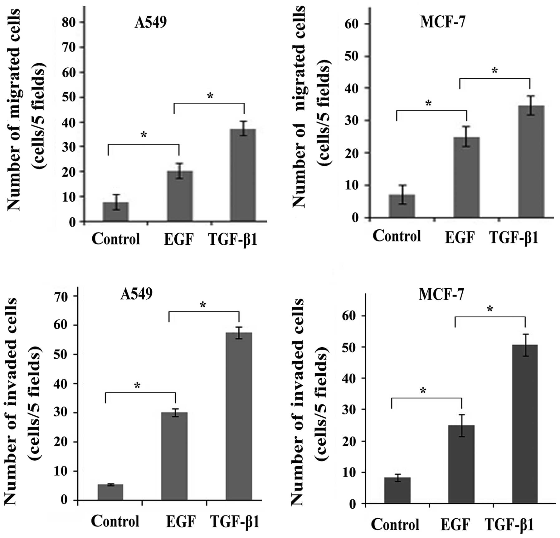 Transforming growth factor-β1 induces EMT by the transactivation of