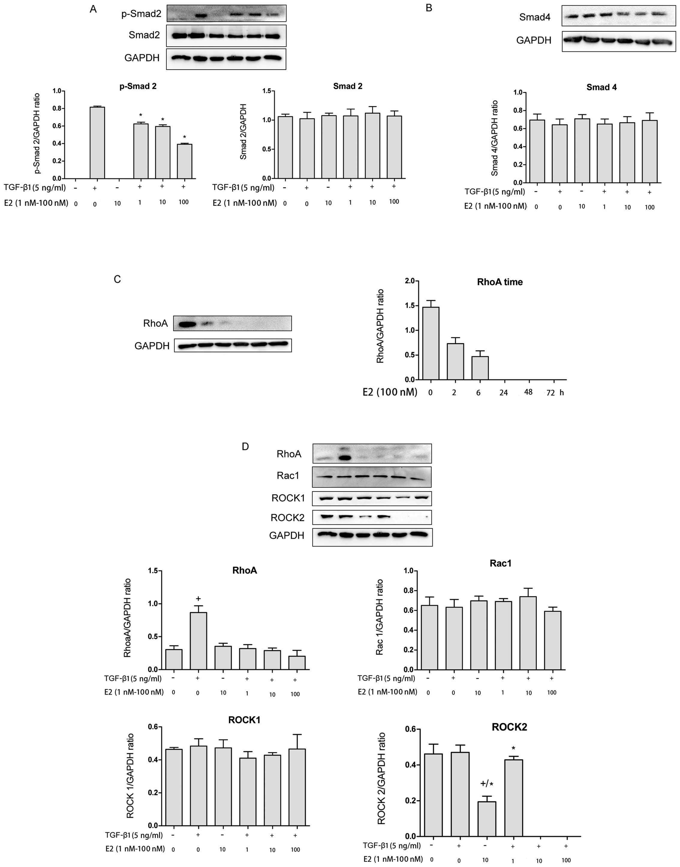 Estradiol Attenuates The Tgf 1 Induced Conversion Of Primary Tafs