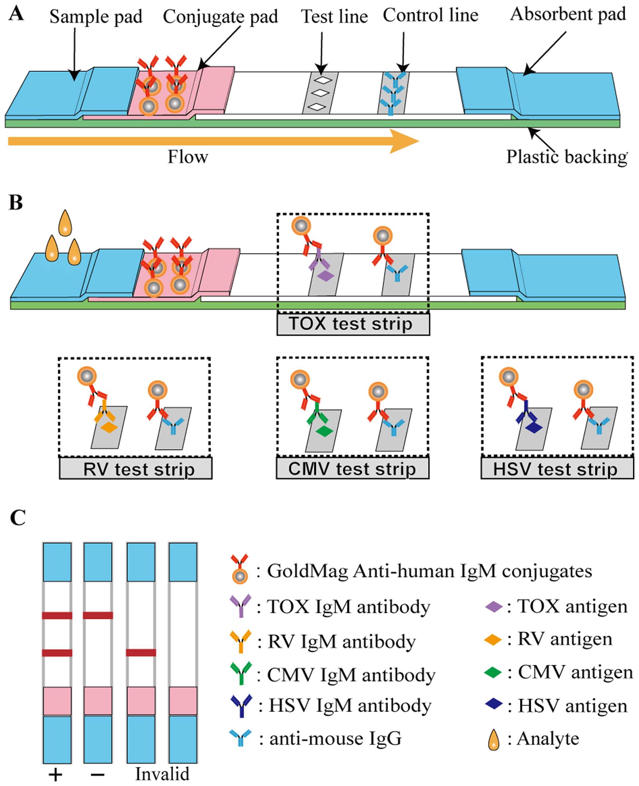 immunochromatography