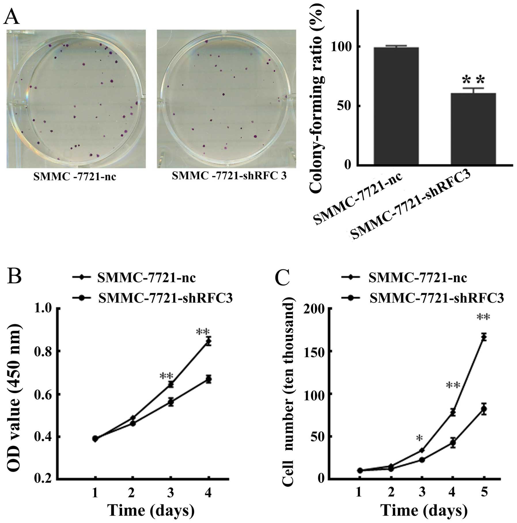 shRNA mediated silencing of the RFC3 gene suppresses hepatocellular