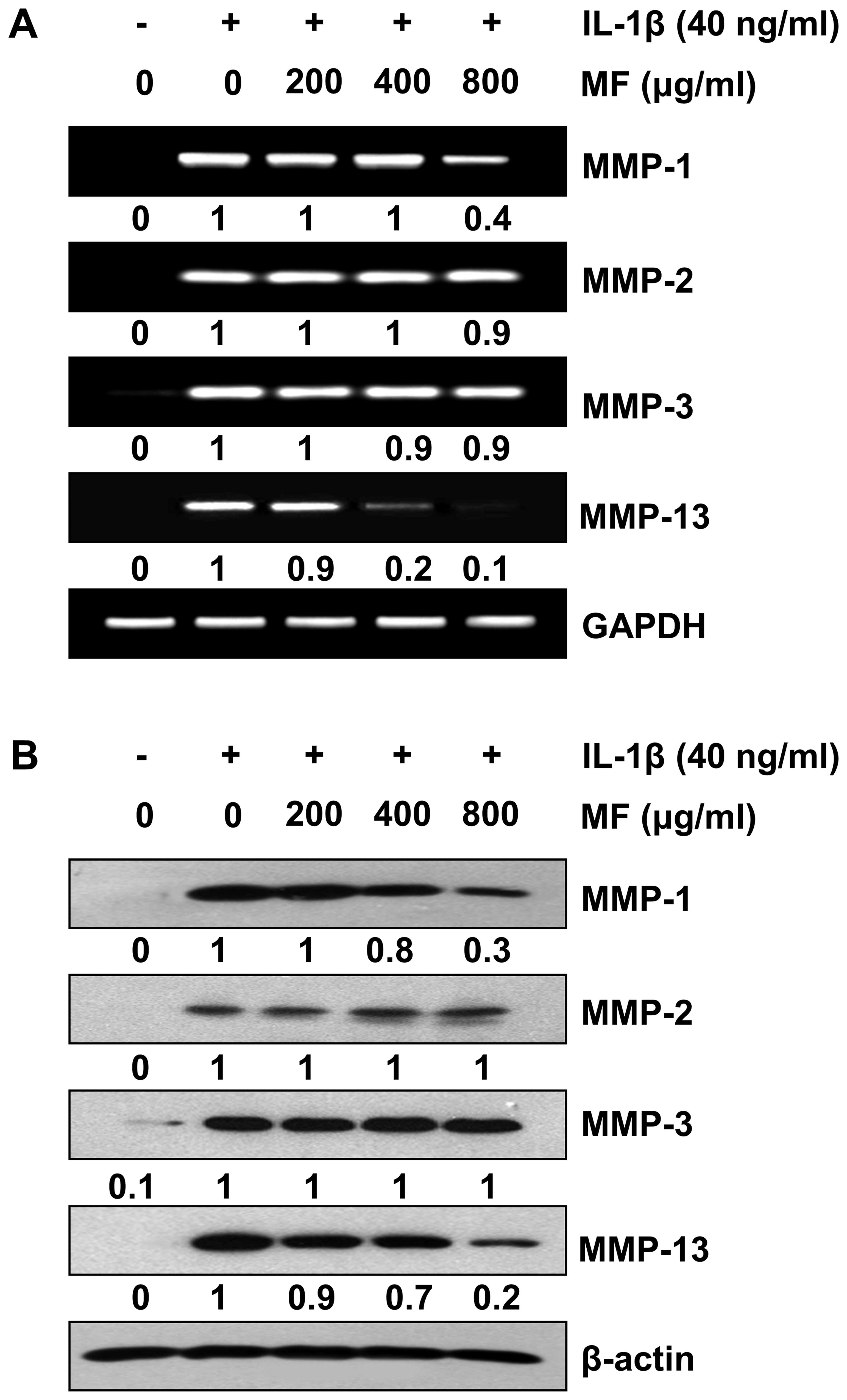 Mori folium inhibits interleukin-1β-induced expression of