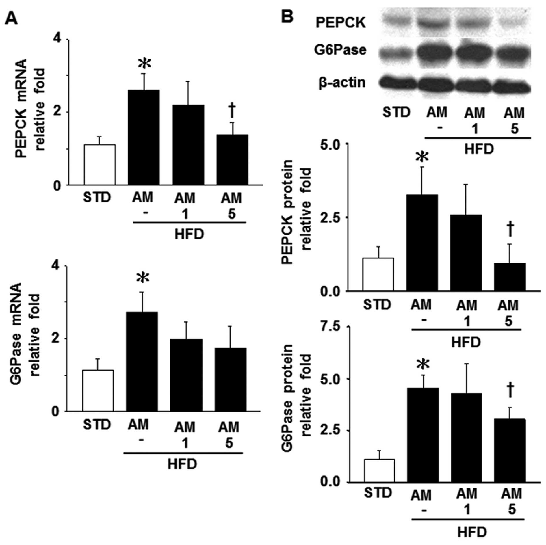 determine the activity of g6pase Transfection analysis was performed to determine the effects of smek/pp4c expression on crtc2- or foxo1a- dependent activation of g6pase promoter activity in hepg2.