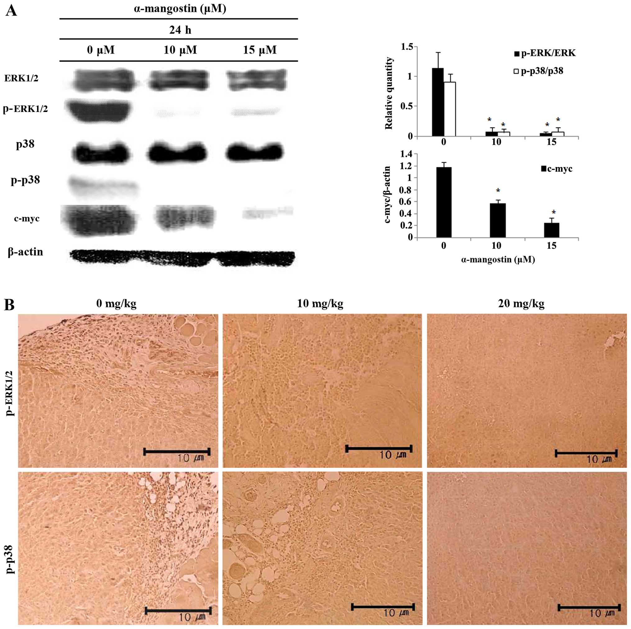 Antitumor and apoptosis-inducing effects of α-mangostin extracted