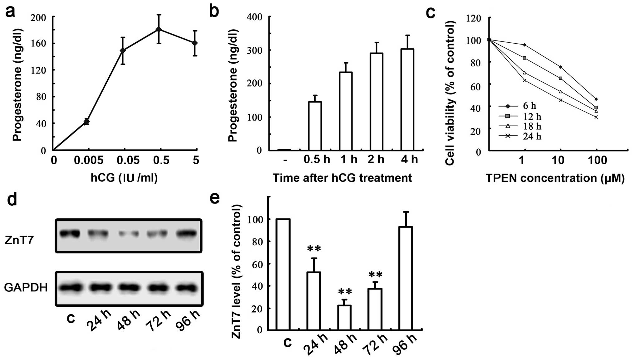 A potential role for zinc transporter 7 in testosterone