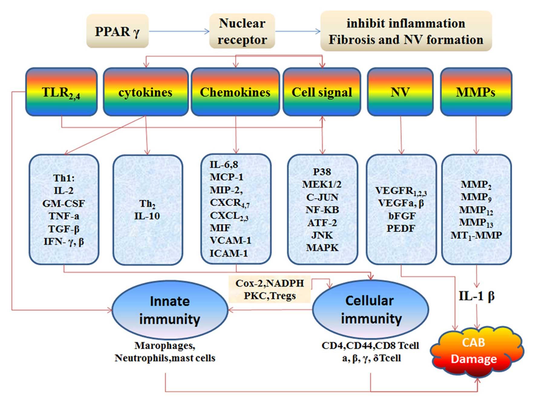 The molecular mechanisms of ac...