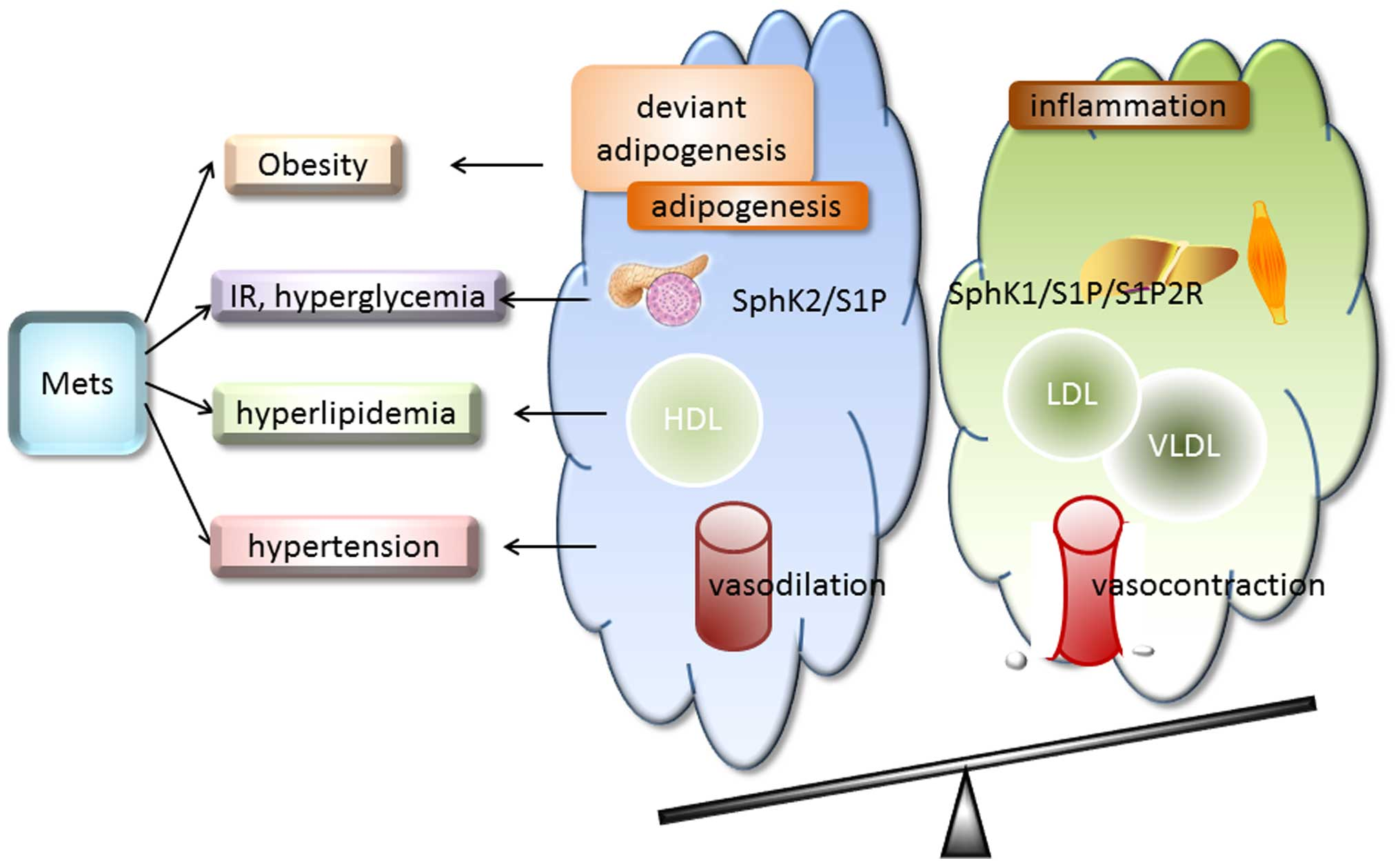 photos officielles 1dfcf 2d713 Sphingosine 1-phosphate in metabolic syndrome (Review)
