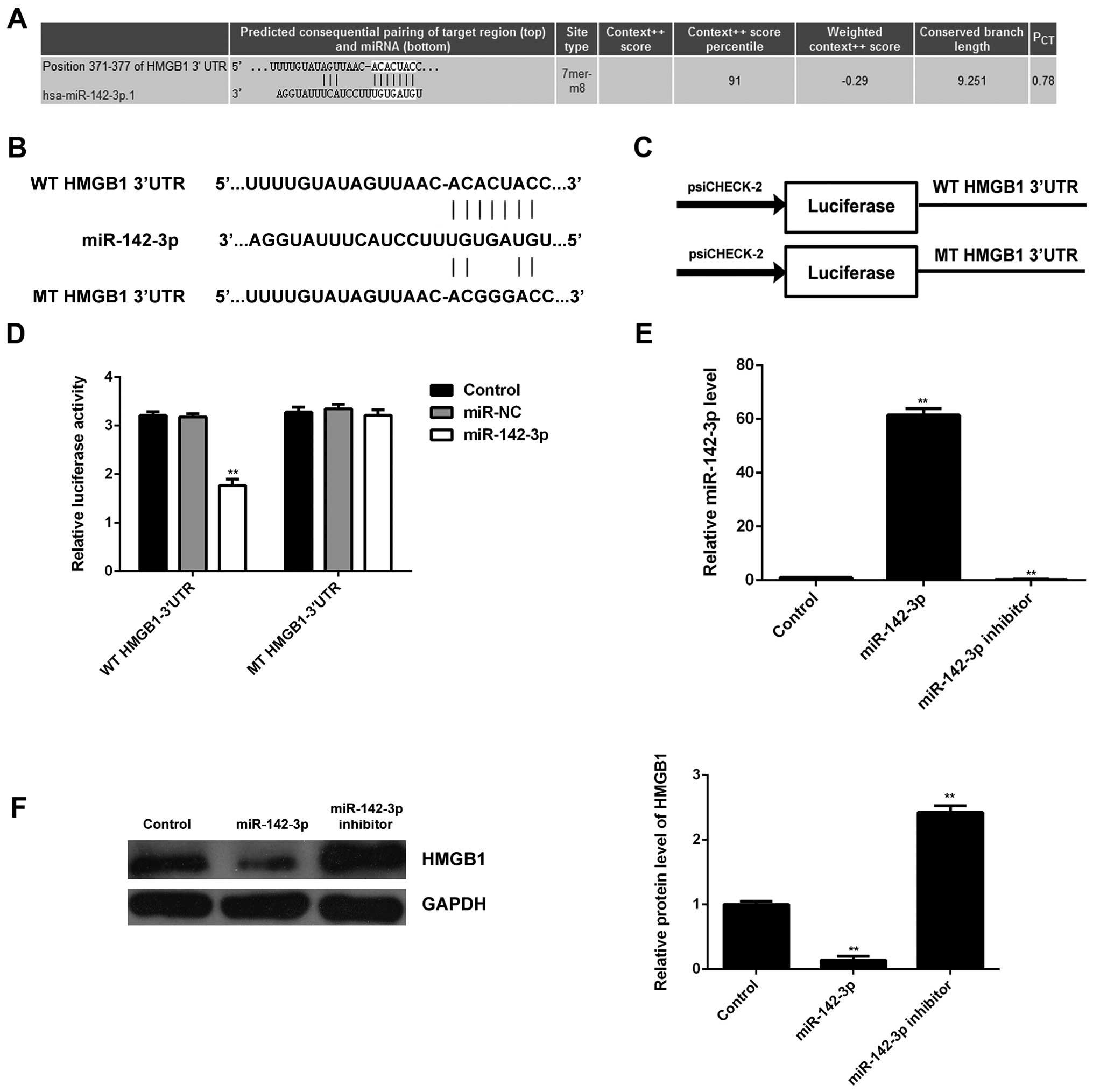 MicroRNA-142-3p inhibits hypoxia/reoxygenation‑induced