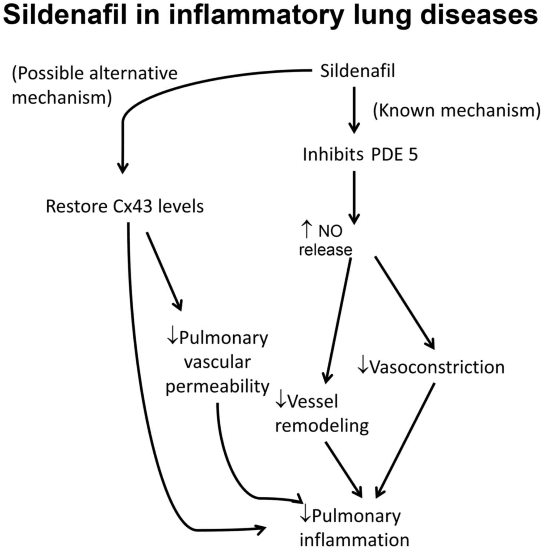 The Role Of Gap Junctions In Inflammatory And Neoplastic Disorders Schumacher Se 1520 Wiring Diagram Figure 1 Mechanisms Action Sildenafil Treatment Pulmonary Diseases