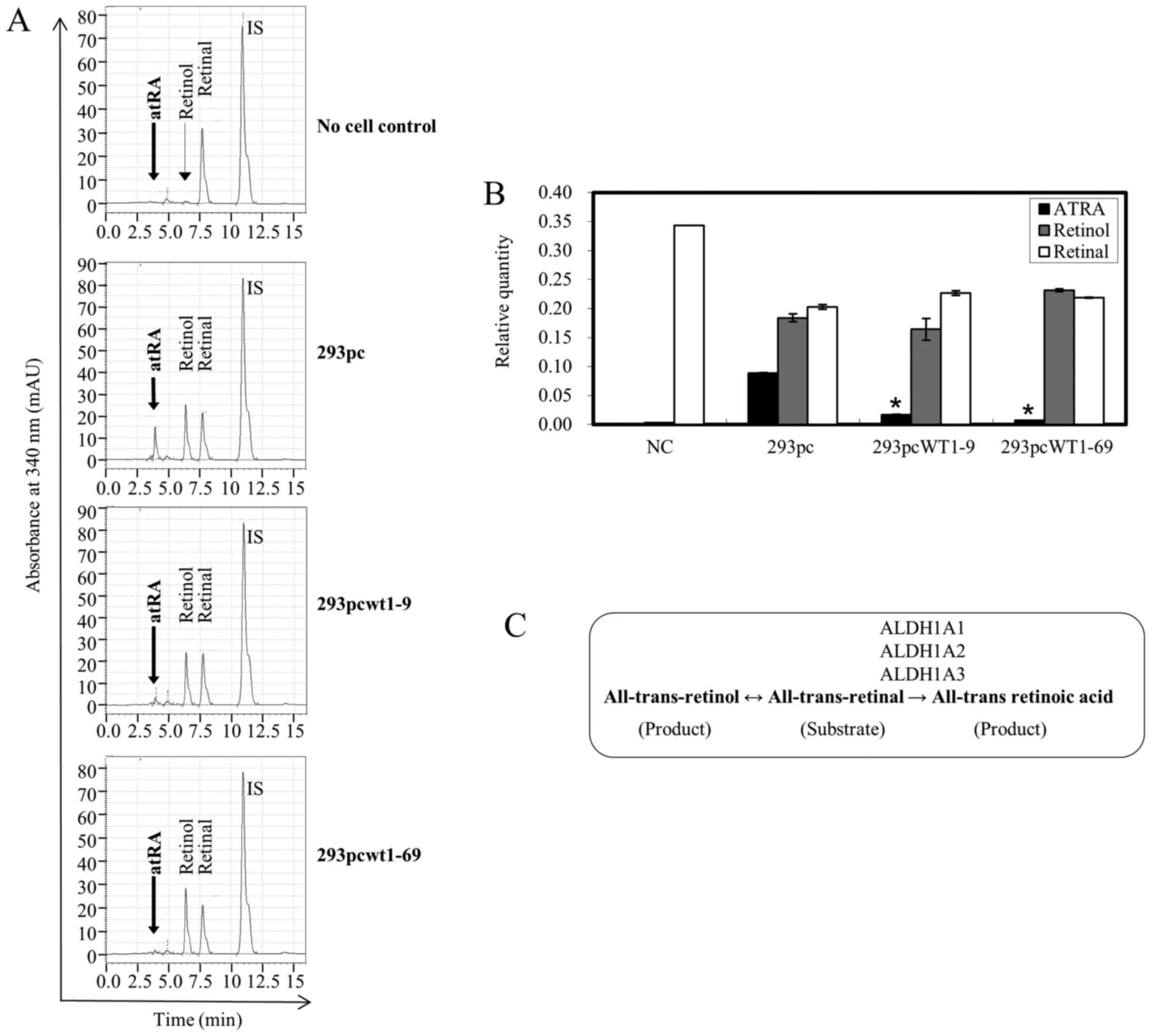 Regulation of retinoic acid synthetic enzymes by WT1 and