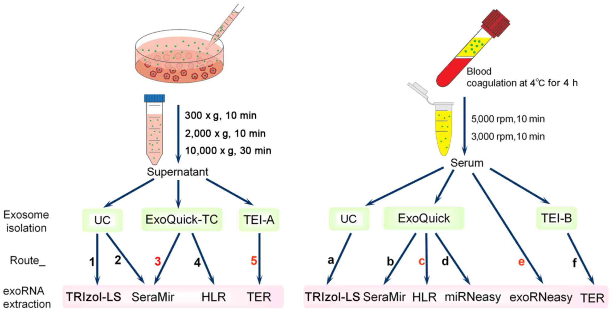 Comparison Of Isolation Methods Of Exosomes And Exosomal Rna From Cell Culture Medium And Serum